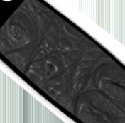 Black Crocodile Hornback